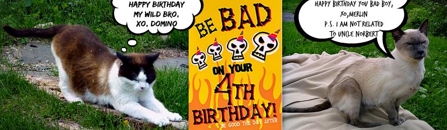 cat birthday bad boys