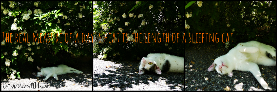 summer cat quote-hot weather