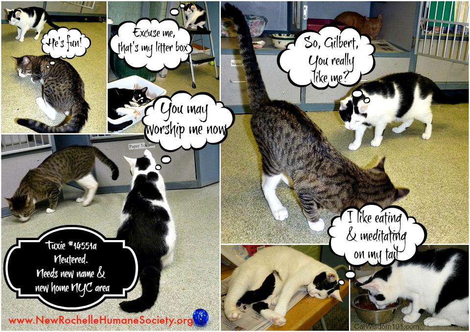 NRHS Tuxie Gilbert Cats