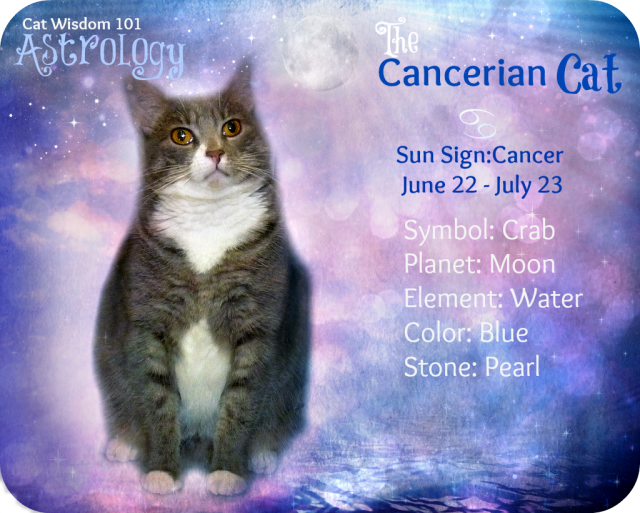 astrology cat Cancerian