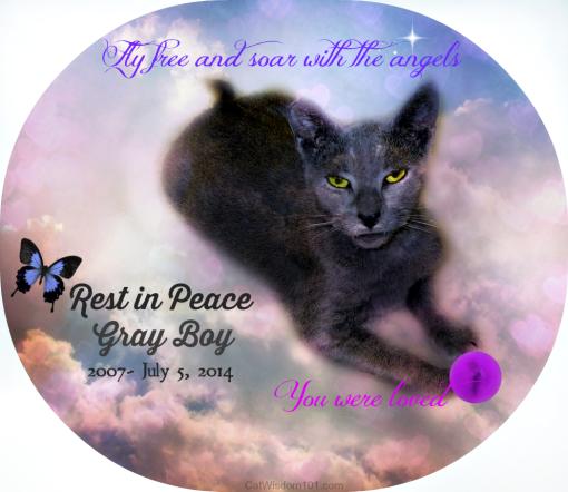 Gray Boy shelter cat RIP