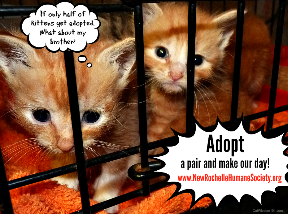 Kittens, Kittens, Kittens! & When Bonded Cats Split Up