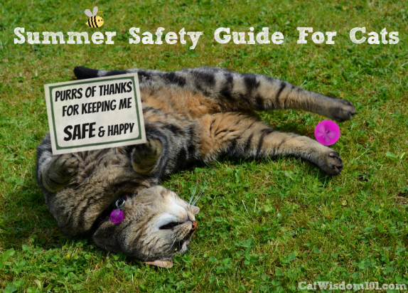 Summer safety guide for cats