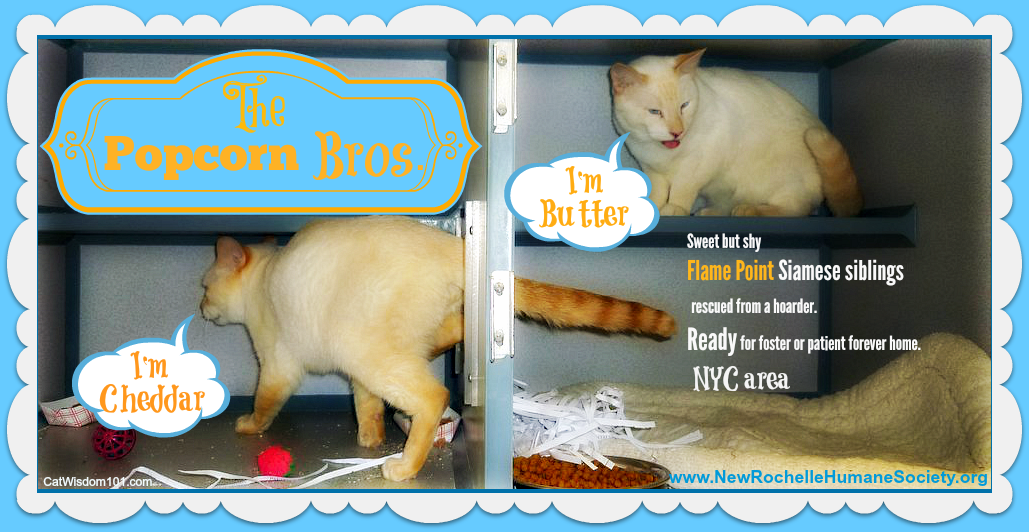 Cat Shelter Notes & Meet the Popcorn Brothers