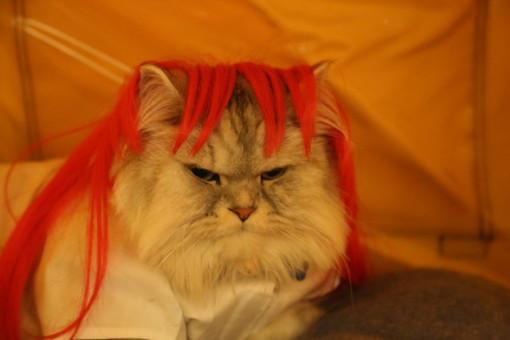 Cat fashion NYC