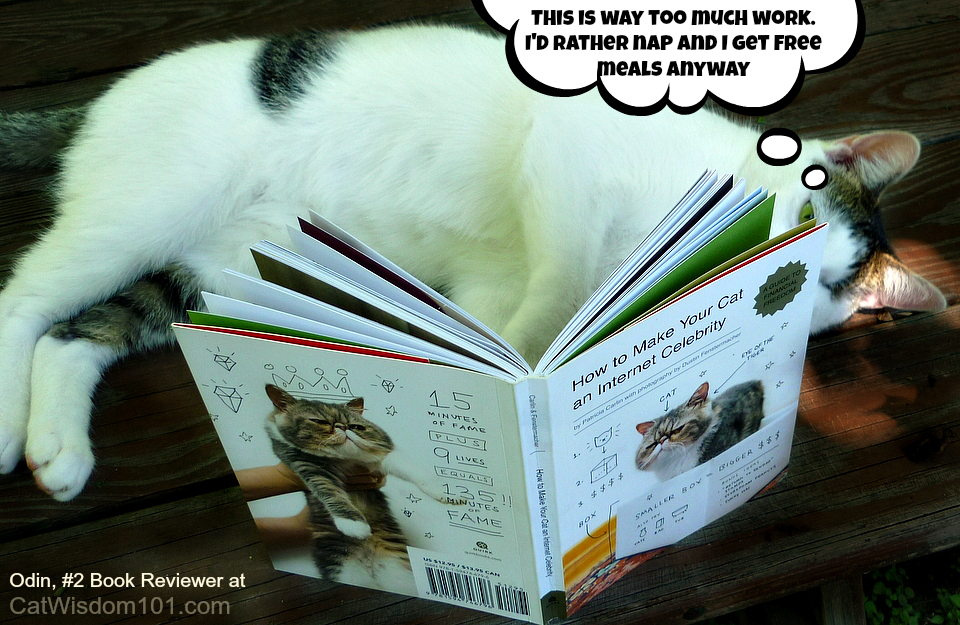 1-Famous celebrity cat book
