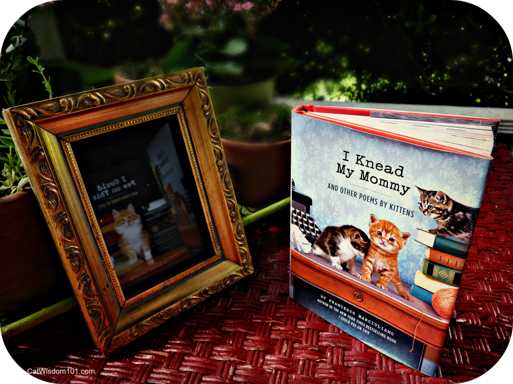 1-I-knead-my-mommy-book-giveaway-e1406948843269 Q & A  With NY Times Bestselling Cat Writer Francesco Marciuliano, Author of I Could Pee on This