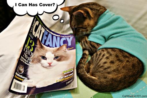 Cat Fancy-Susan Logan-