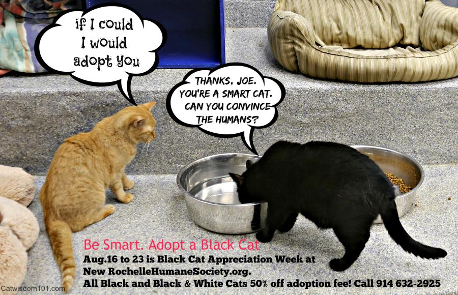 Black cat adoption week-NRHS