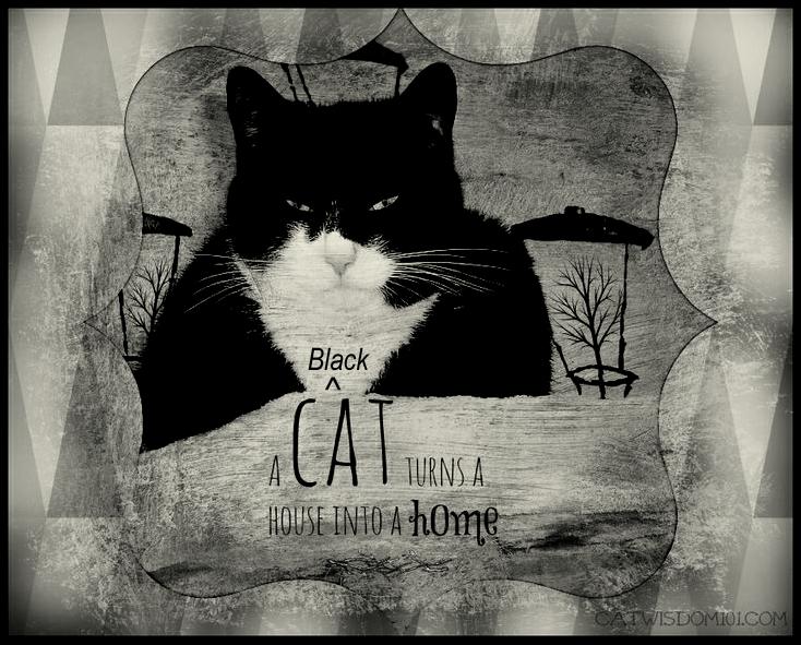 #adorableadoptables black #cats