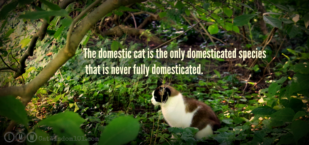 Introducing feral cat to domestic cat