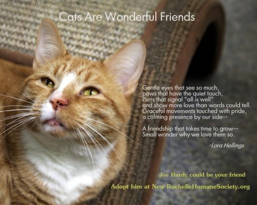 Joe hardy-cat adoption psa