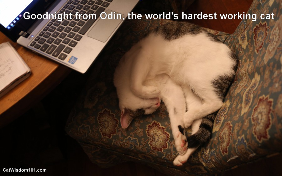 Odin cat office assistant