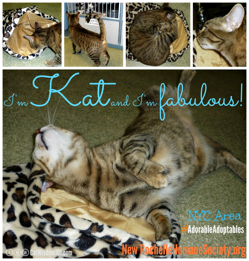Shelter Volunteer: Happiest Happy Tails