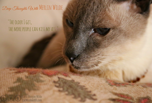 Merlin cat--DEEP THOUGHTS