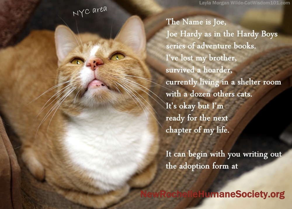 The Poetry of Shelter Cats