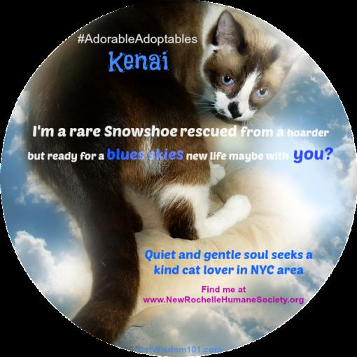 NRHS-Kenai-#Adorableadoptables