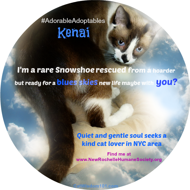 Surprising Adoptions & Meet Snowshoe Cat Kenai