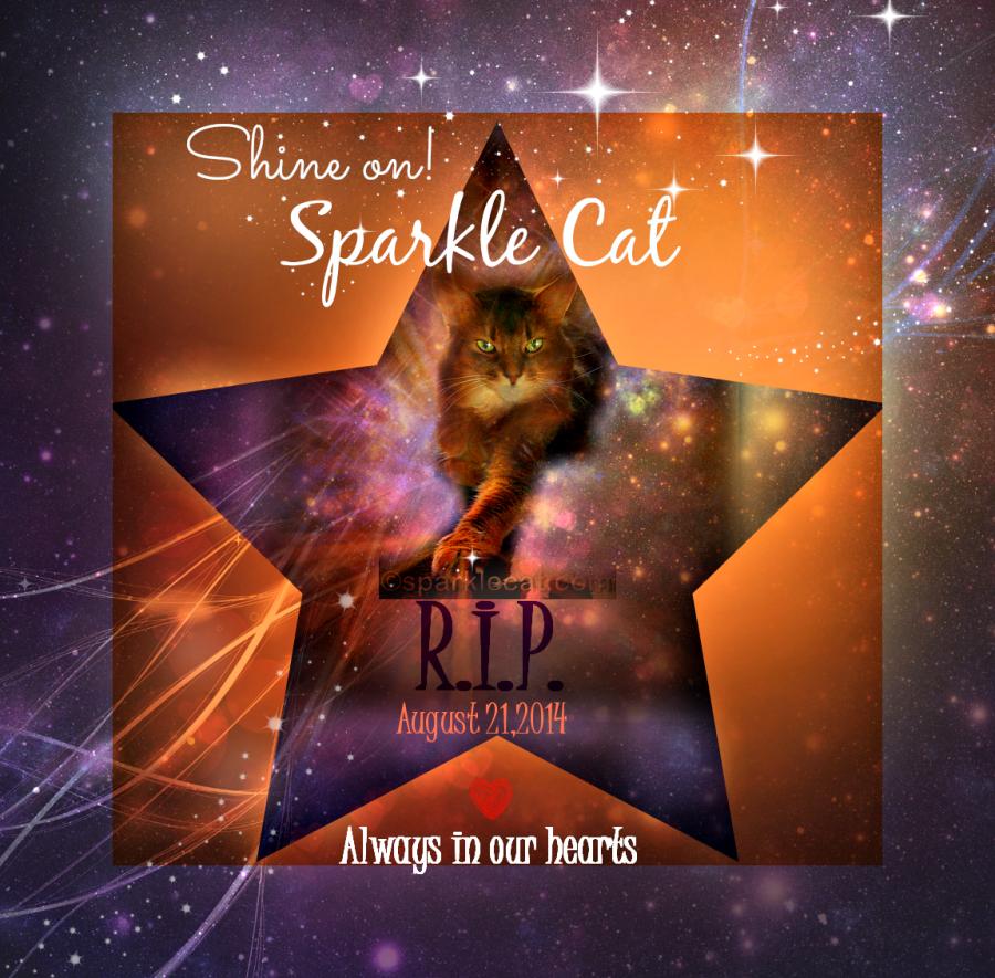 Sparkle Cat RIP