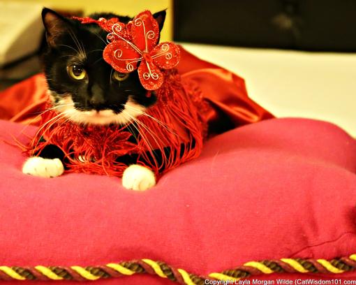 cat fashion-chicago