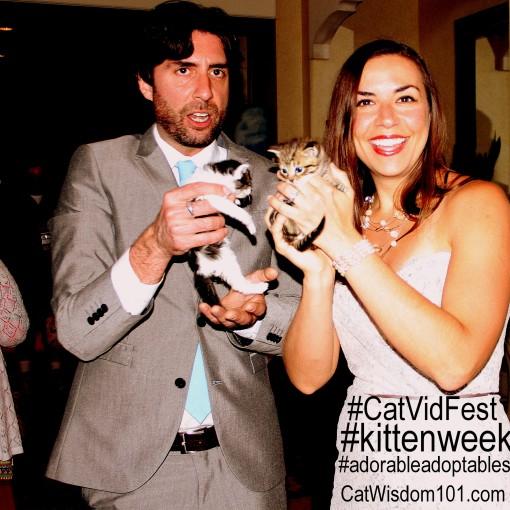 #catvidfest #kittenweek #adorableadoptables