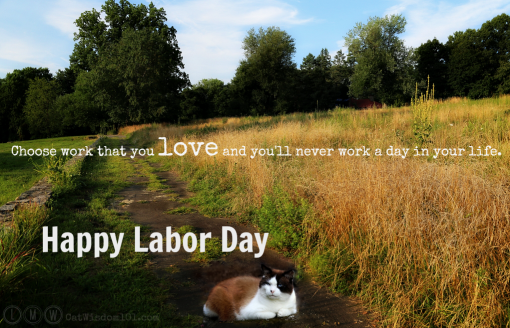 cats-labor day