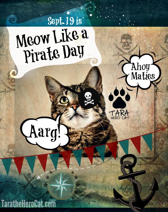 Meow like a pirate day-Tara hero cat