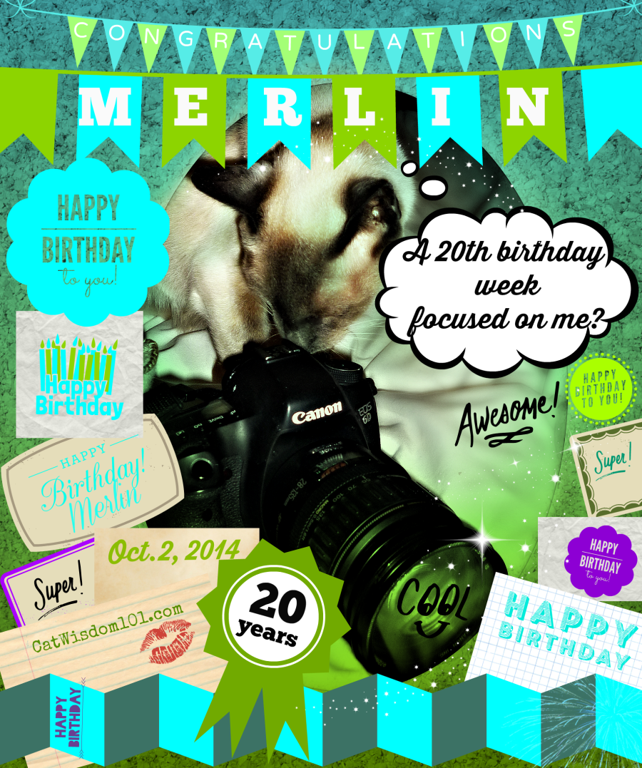 Merlin cat 20th birthday