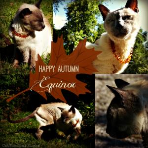 Monday with merlin-cat-autumn Equinox