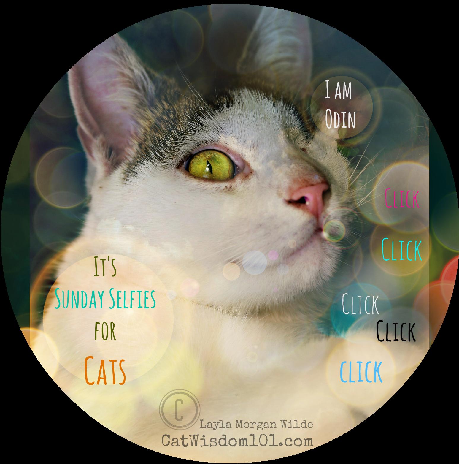 cat's six senses