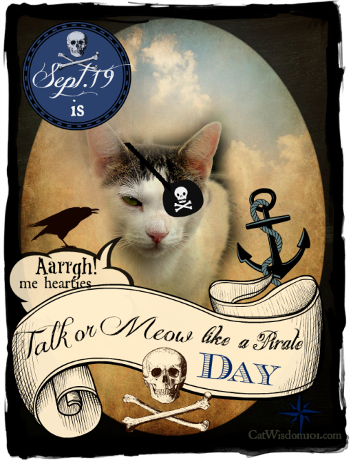 talk like pirate day-meow like a pirate