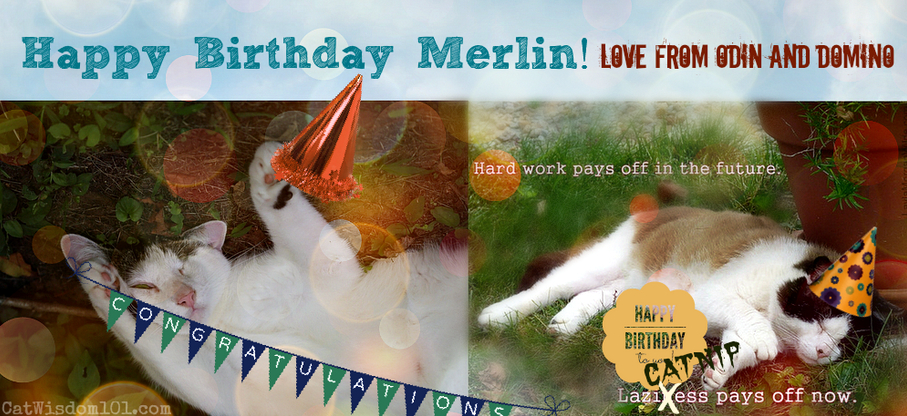 cat birthday card-merlin