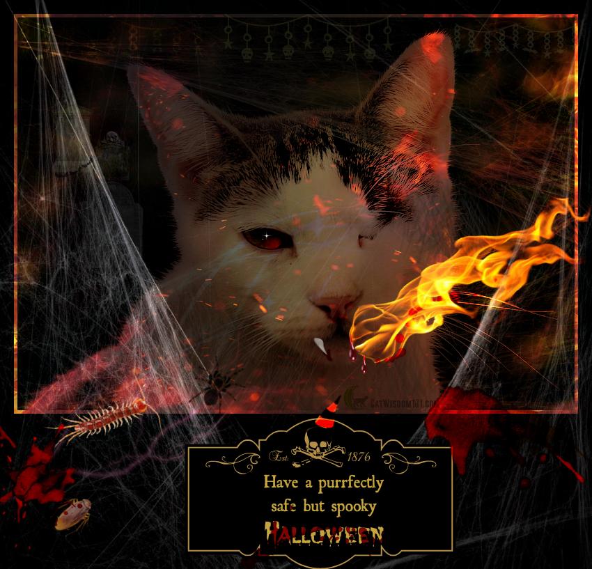 Halloween cat #frankenpet