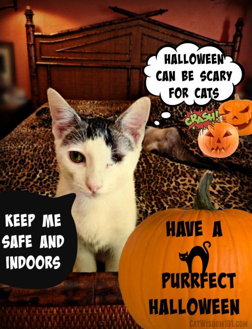 Halloween cats PSA