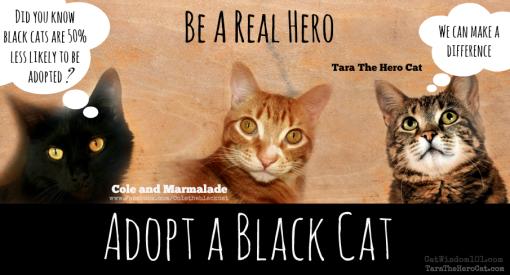 Tara The Hero Cat with Cole and Marmalade