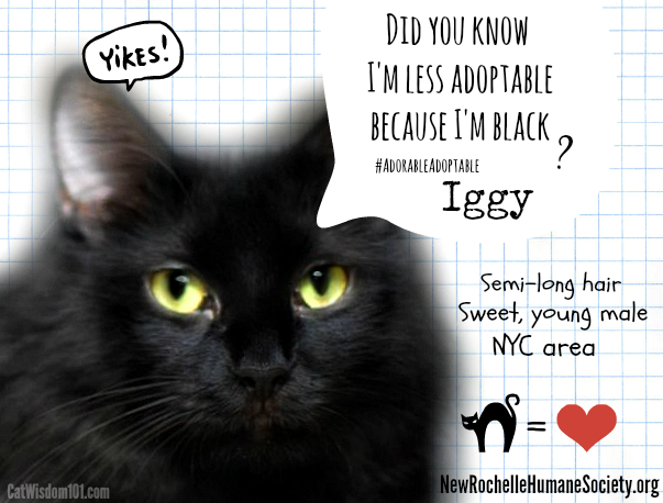 Be The Change For Animals: #AdorableAdoptable Black Cat Iggy