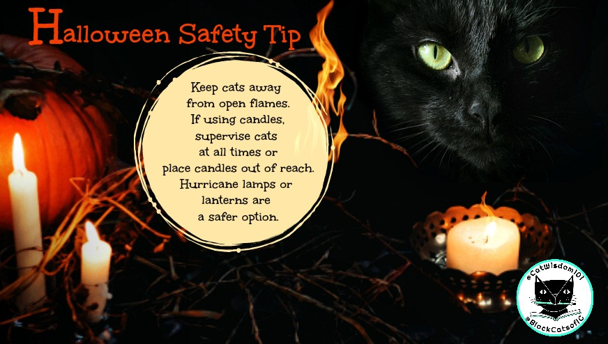 October_blackcatawarenessmonth_catwisdom101_halloween_candles