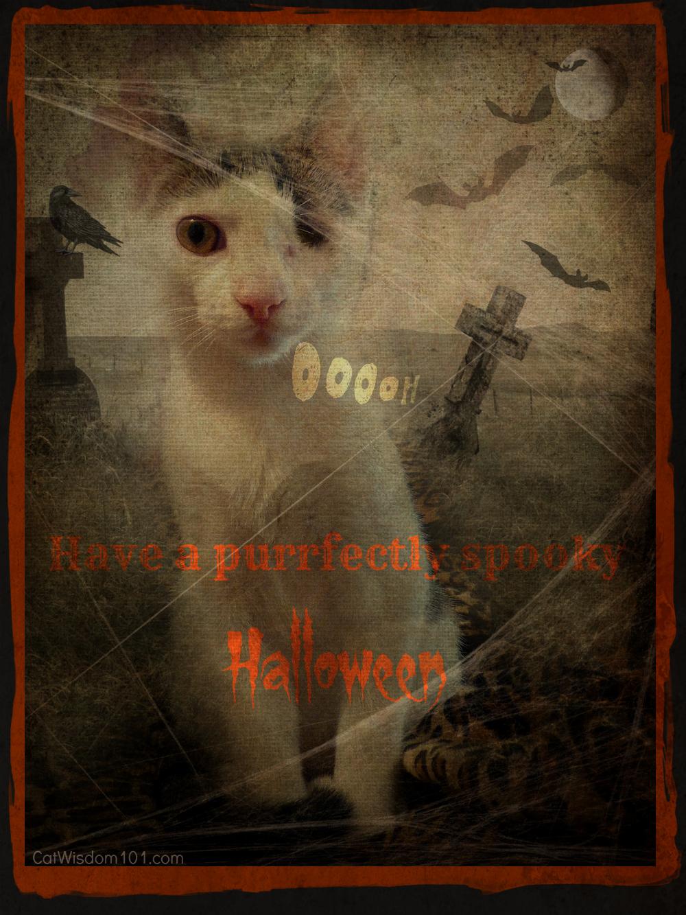 #ThrowbackThursday-Halloween