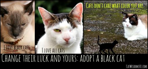 black cat adoption PSA