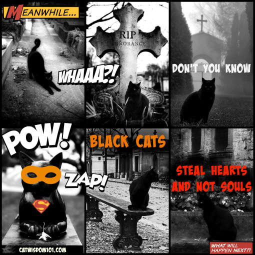 Kick Black cat superstitions to the curb