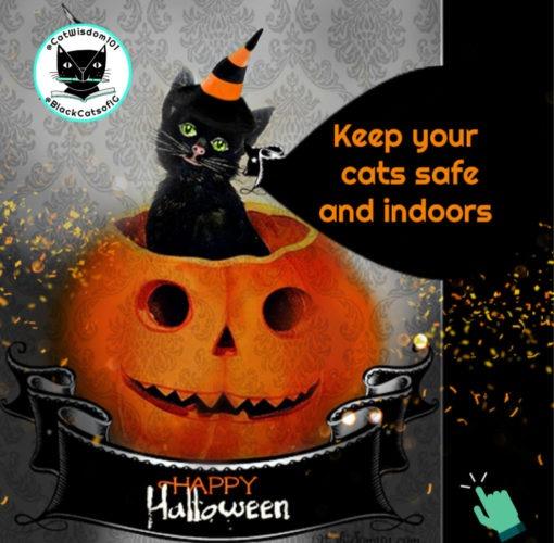 Halloween cat safety