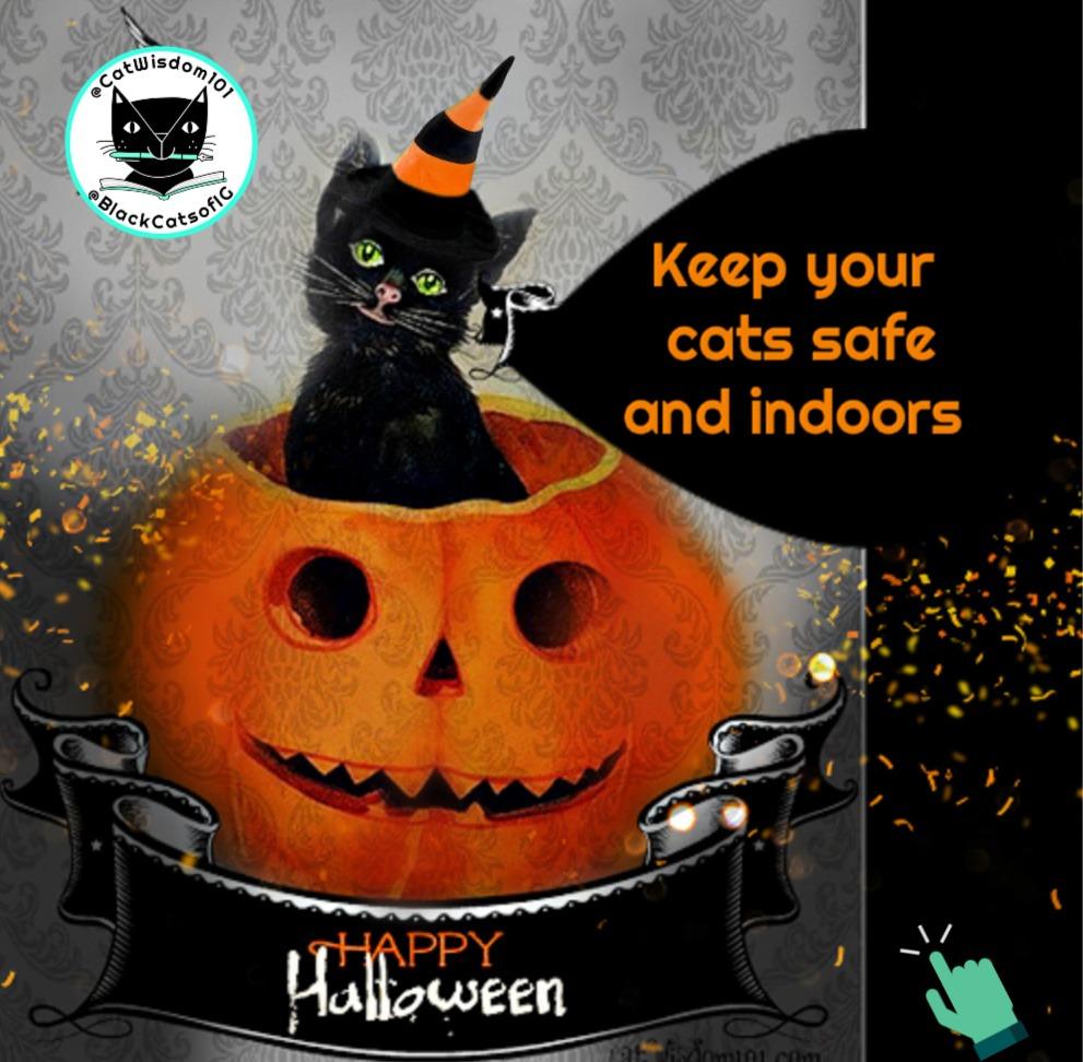 halloween-black-cat-pumpkin_catwisdom101 5 Purrfect Halloween Safety Tips: All NEW