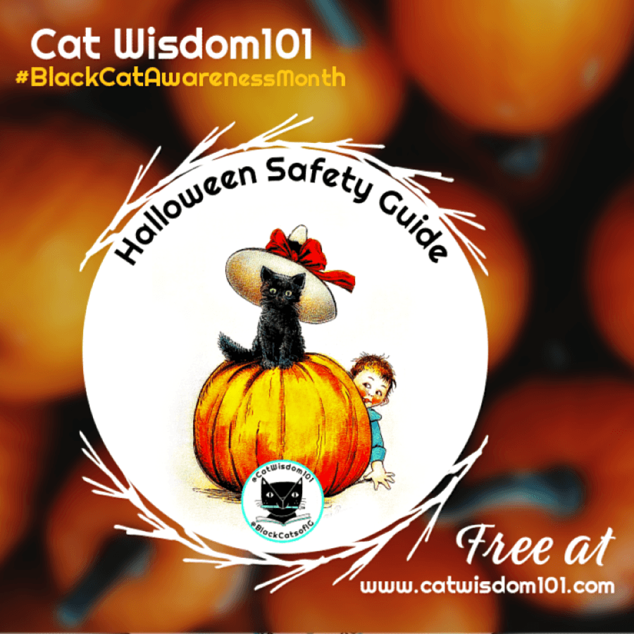halloween_safety_cats_catwisdom101-3 5 Purrfect Halloween Safety Tips: All NEW