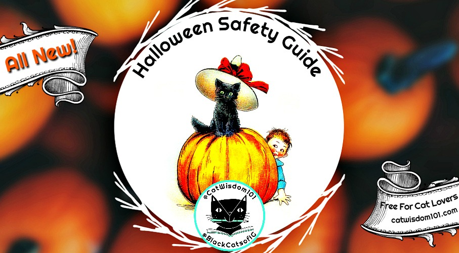 5 Purrfect Halloween Safety Tips: All NEW