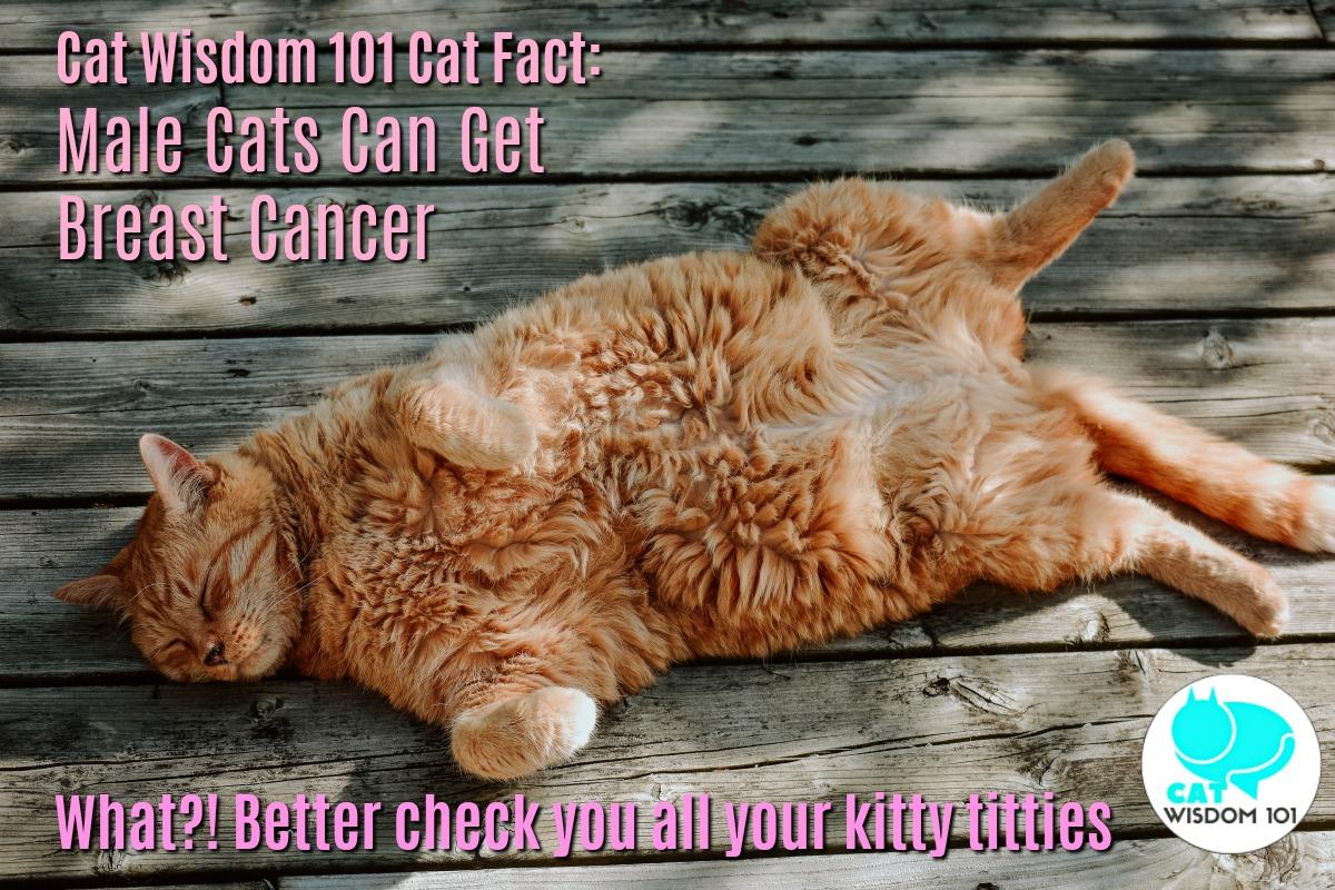 kitty_titties_breast_cancer_catwisdom101