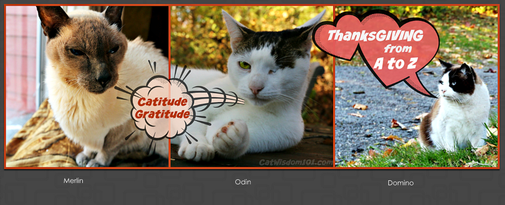 Cats Thanksgiving-gratitude