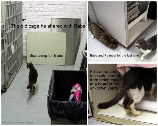 shelter cat out of cages