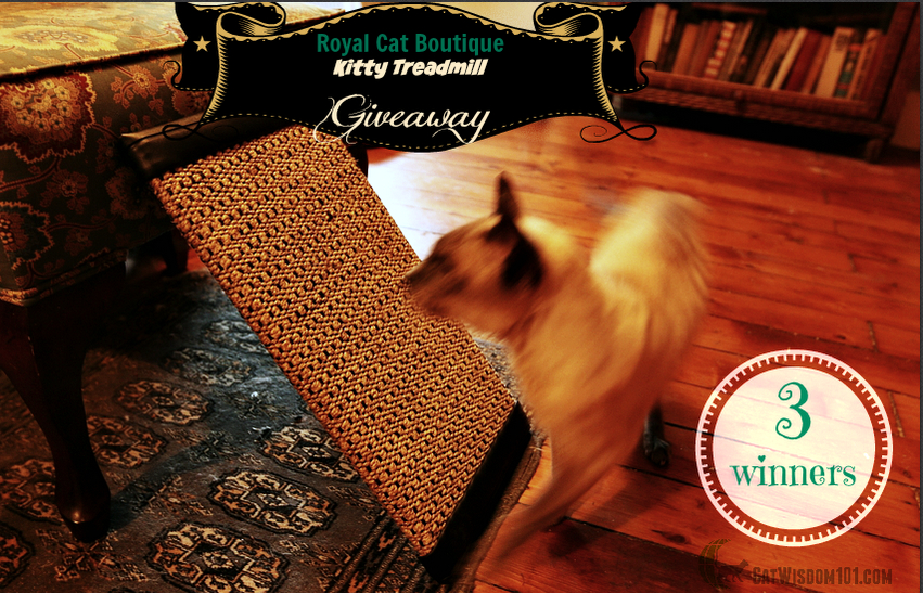 Royal Cat Boutique Kitty Treadwell giveaway