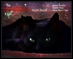 Scorpio black cat astrology zodiac