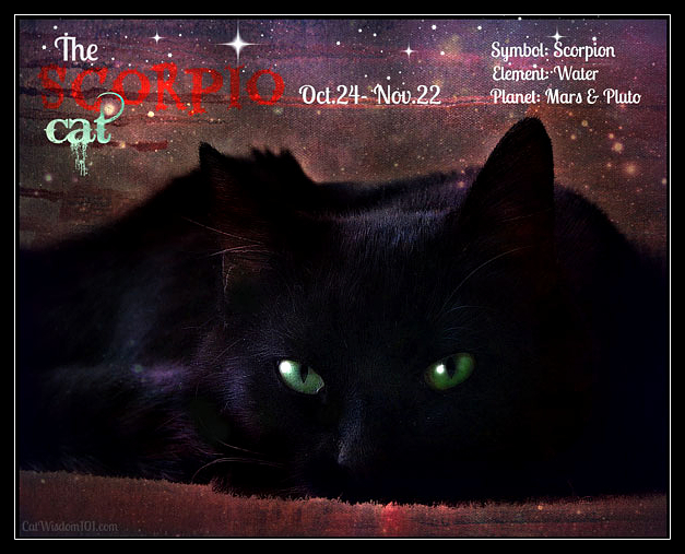 Scorpio black cat astrology zodiac